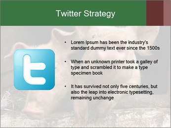 Farm Pigs PowerPoint Template - Slide 9