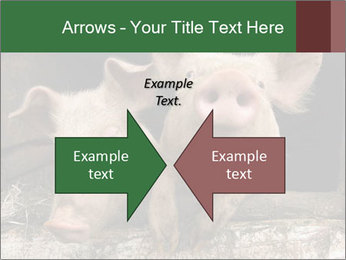 Farm Pigs PowerPoint Template - Slide 90