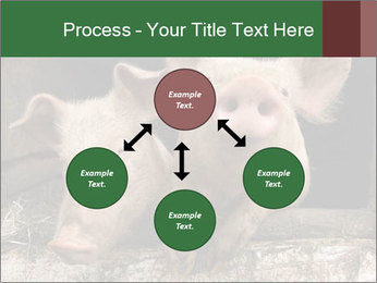 Farm Pigs PowerPoint Template - Slide 91