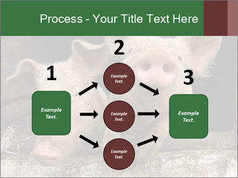 Farm Pigs PowerPoint Template - Slide 92