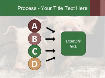 Farm Pigs PowerPoint Template - Slide 94