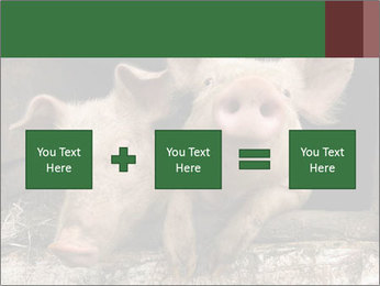 Farm Pigs PowerPoint Template - Slide 95
