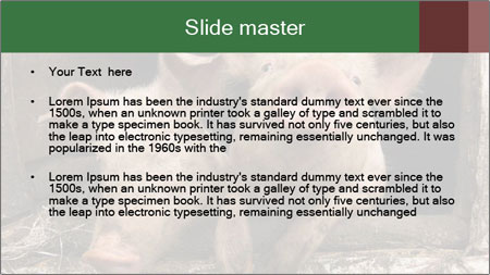 Farm Pigs PowerPoint Template - Slide 2