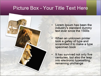Lonely Lion PowerPoint Templates - Slide 17