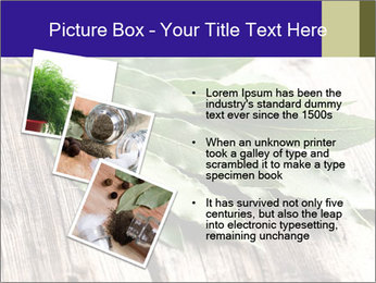 Aromatic Herb PowerPoint Template - Slide 17