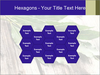 Aromatic Herb PowerPoint Template - Slide 44