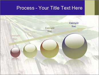 Aromatic Herb PowerPoint Template - Slide 87