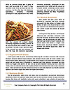 0000091159 Word Template - Page 4