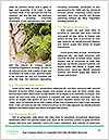 0000091171 Word Templates - Page 4
