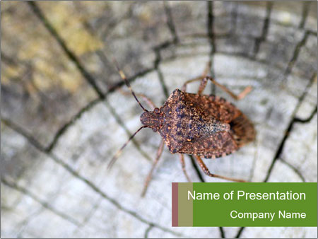 Brown Insect PowerPoint Templates