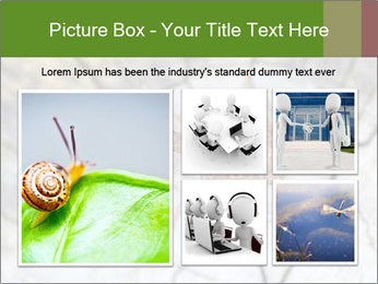 Brown Insect PowerPoint Templates - Slide 19