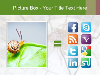 Brown Insect PowerPoint Templates - Slide 21