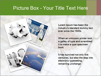Brown Insect PowerPoint Templates - Slide 23