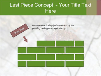Brown Insect PowerPoint Templates - Slide 46