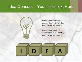 Brown Insect PowerPoint Templates - Slide 80