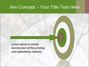 Brown Insect PowerPoint Templates - Slide 83