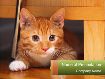 Little Red Cat PowerPoint Template - Slide 1