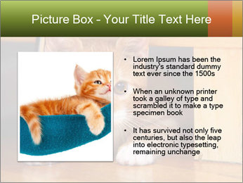 Little Red Cat PowerPoint Template - Slide 13