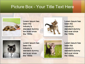 Little Red Cat PowerPoint Template - Slide 14