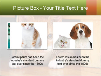 Little Red Cat PowerPoint Template - Slide 18