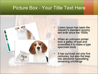 Little Red Cat PowerPoint Template - Slide 20