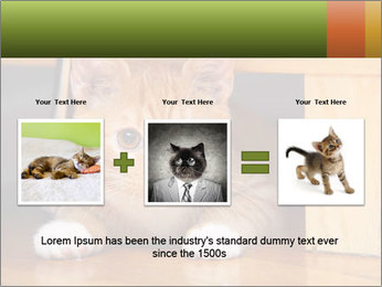 Little Red Cat PowerPoint Template - Slide 22
