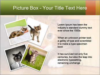 Little Red Cat PowerPoint Template - Slide 23