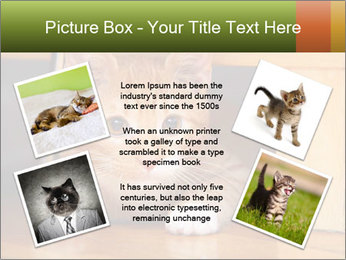 Little Red Cat PowerPoint Template - Slide 24