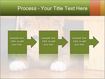 Little Red Cat PowerPoint Template - Slide 88