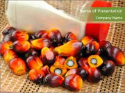 Close up of fresh oil palm fruits PowerPoint Templates