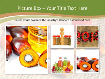 Close up of fresh oil palm fruits PowerPoint Templates - Slide 19