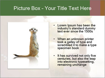 Perfect front PowerPoint Templates - Slide 13