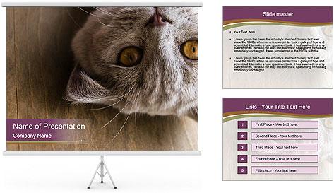 British cat PowerPoint Template