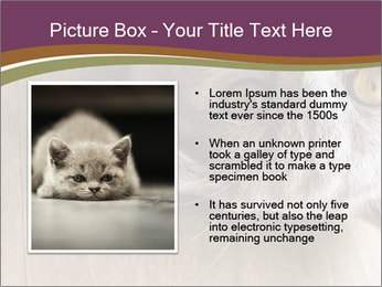 British cat PowerPoint Template - Slide 13