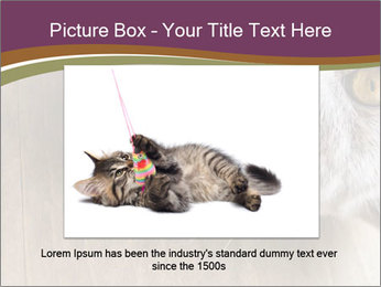 British cat PowerPoint Template - Slide 15