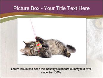 British cat PowerPoint Templates - Slide 15