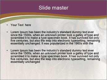 British cat PowerPoint Templates - Slide 2