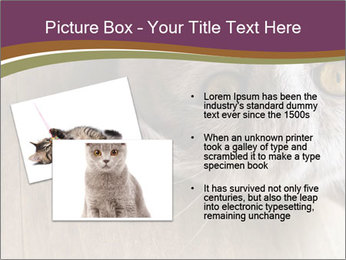 British cat PowerPoint Template - Slide 20