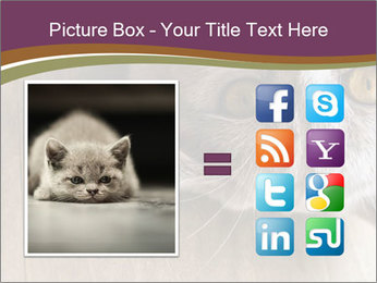 British cat PowerPoint Template - Slide 21