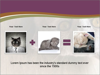 British cat PowerPoint Template - Slide 22