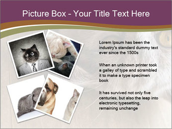 British cat PowerPoint Template - Slide 23