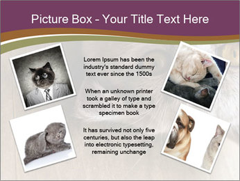 British cat PowerPoint Template - Slide 24