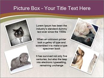 British cat PowerPoint Templates - Slide 24