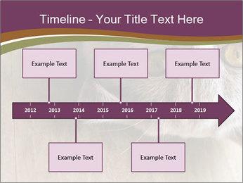 British cat PowerPoint Templates - Slide 28