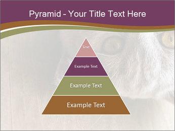 British cat PowerPoint Templates - Slide 30