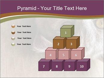 British cat PowerPoint Templates - Slide 31