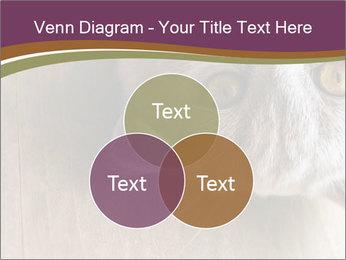 British cat PowerPoint Templates - Slide 33