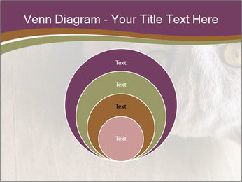 British cat PowerPoint Templates - Slide 34