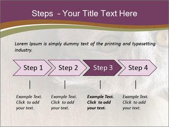 British cat PowerPoint Templates - Slide 4