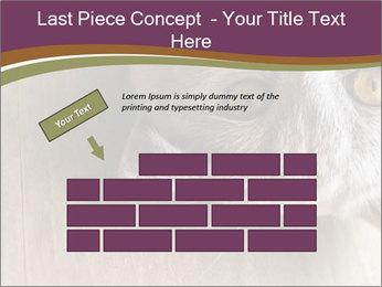British cat PowerPoint Templates - Slide 46